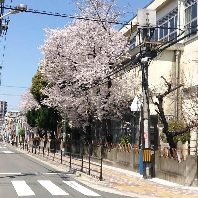 滝井小学校