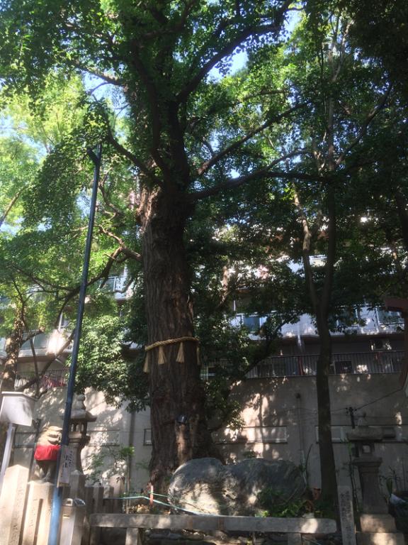 守居神社の御神木