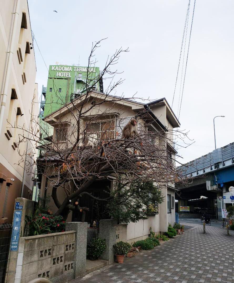 門真市】サルの目撃情報第2弾!...