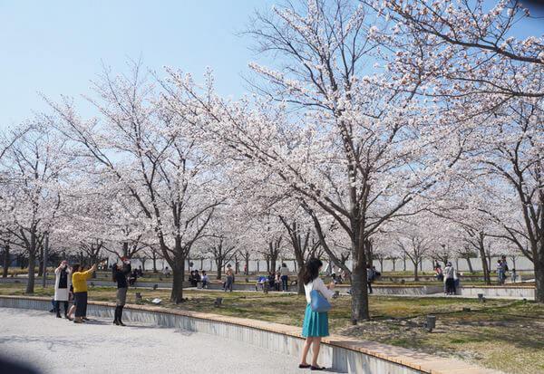 桜の名所 さくら広場