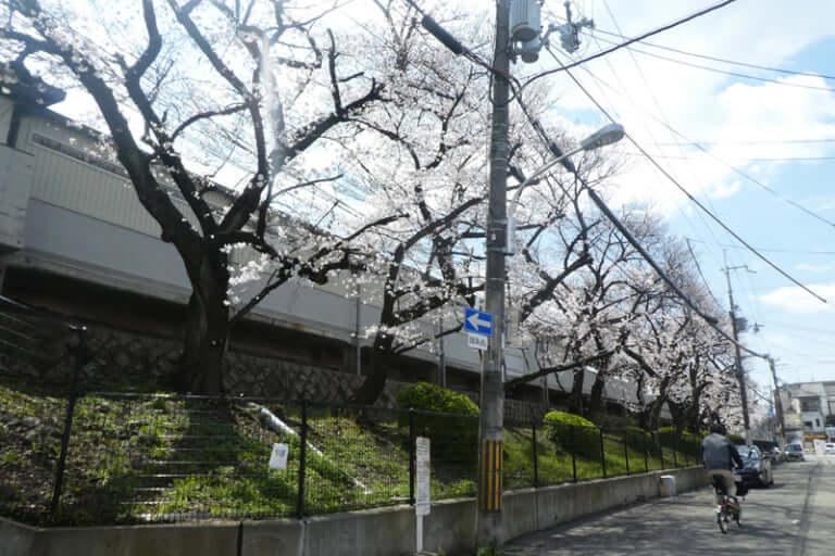 土居駅の桜